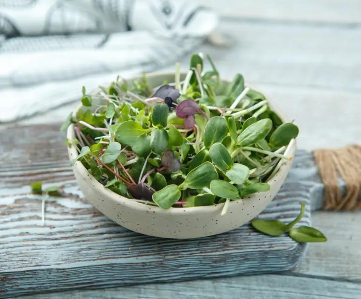 Что такое микрозелень и с чем ее едят